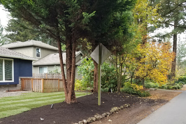 Tree Trimming Services Portland