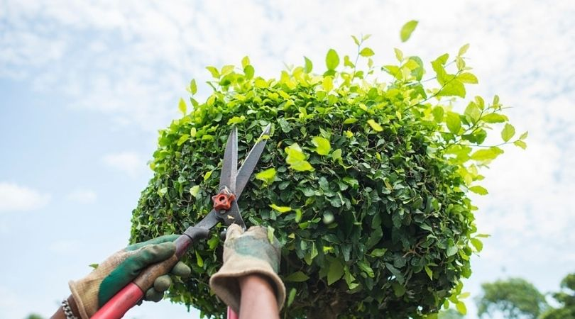Tree Pruning, Trimming, and Removal Services in Portland