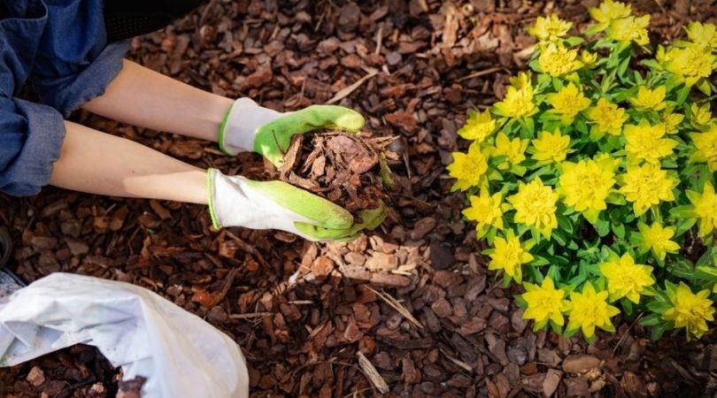 Landscape Maintenance Services in Portland
