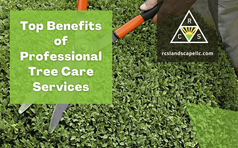 Benefits of Professional Tree Care Services