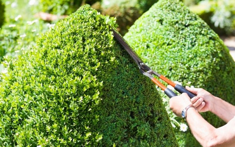 Tree Trimming & Pruning Improves The Health of Trees