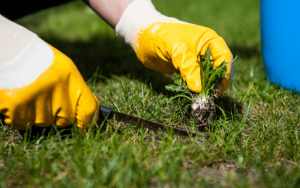 Cost For Lawn Weeding
