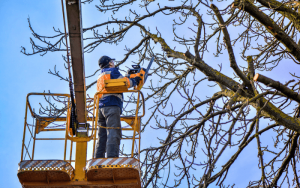Tree Trimming and Removal Cost