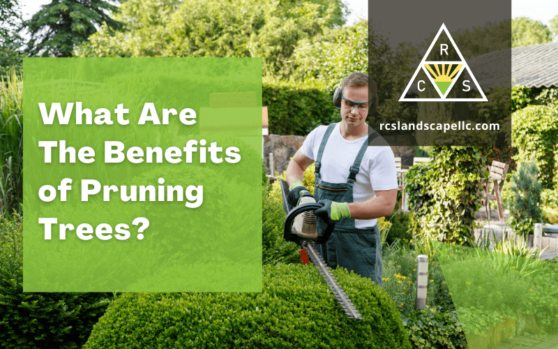 What Are The Benefits of Pruning Trees?