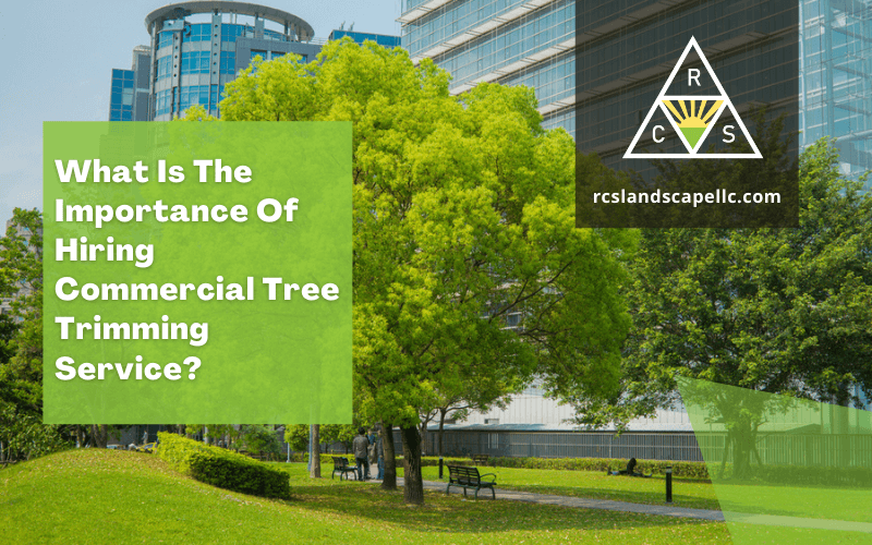 What Is The Importance Of Hiring Commercial Tree Trimming Service?